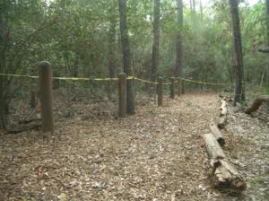 Palmetto Trail With Guide Ropes